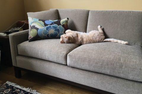 Pet Friendly Furniture Del Teet Furniture