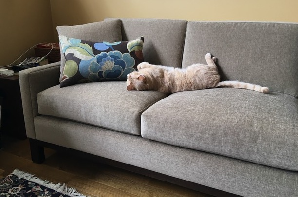 "Otis gives his absolute approval to ""his"" new Del-Teet Kuala style sofa!"